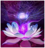 Violet Lotus - Meditations with Rowena Beaumont